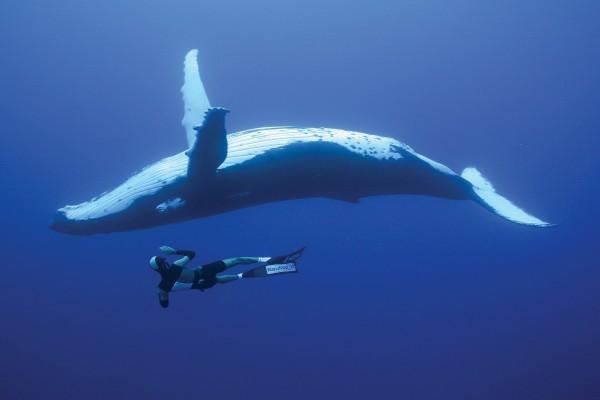 Buceando con una ballena