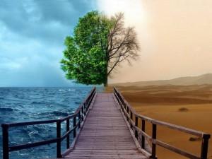 Árbol de contrastes