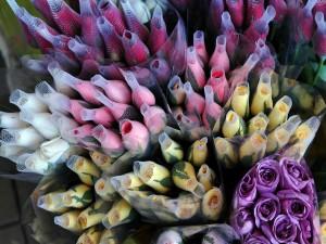 Postal: Pimpollos de rosas de varios colores