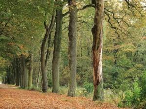 Postal: Hilera de árboles