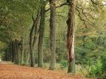 Hilera de árboles