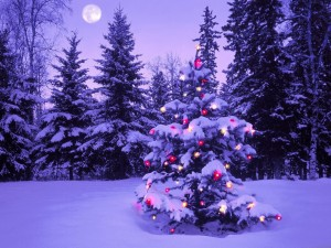 Postal: Árbol de Navidad natural