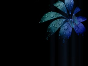 Postal: Flor y mariposa