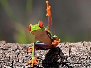 Rana levantando el dedo