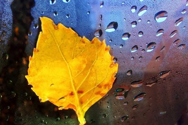 Hoja amarilla apoyada sobre un vidrio con gotas