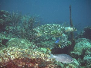 Fauna acuática del Mar Caribe, en Venezuela