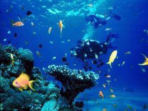 Postal: Buceando entre peces de colores