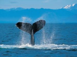 Cola de una ballena