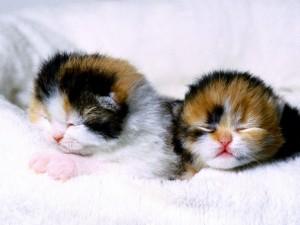 Postal: Gatitos bebés