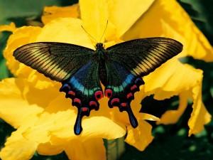 Postal: Mariposa brillante