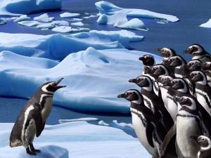 Postal: Reunión de pingüinos