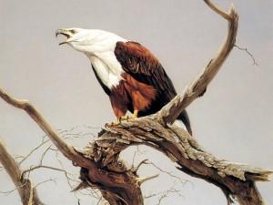 Postal: Águila en las ramas