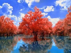 Postal: Árboles rojos en el agua