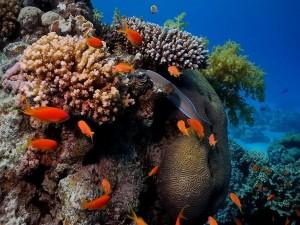 Peces naranjas bajo el agua