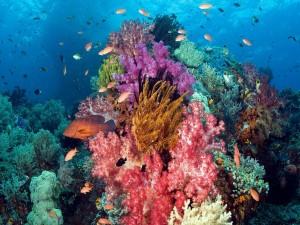 Peces en el arrecife de coral