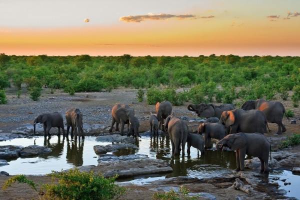Elefantes bebiendo agua en la sabana africana