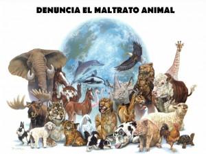 Denuncia el maltrato animal