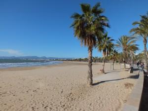 Postal: Palmeras en la playa