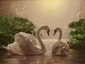 Cisnes en un estanque
