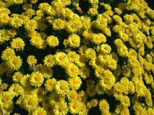 Postal: Flores amarillas