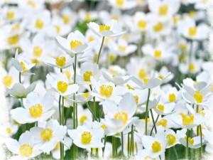 Postal: Florecillas blancas