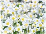 Florecillas blancas