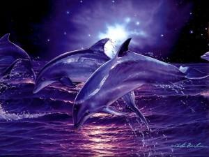 Delfines de noche