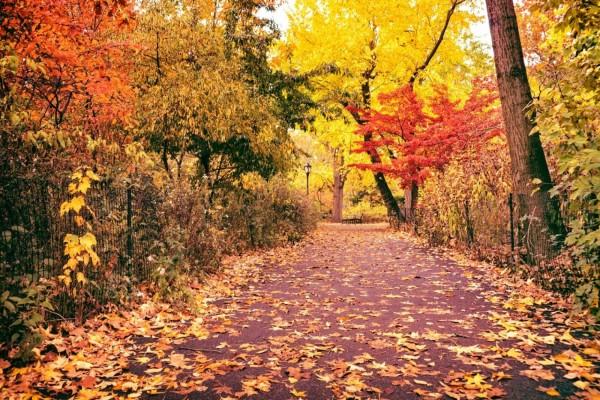 Sendero en otoño