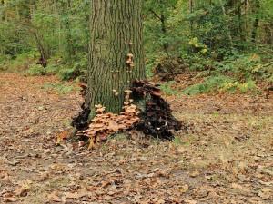 Hongos en un árbol