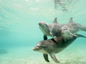 Postal: Delfines bajo el mar