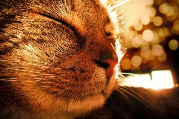 Un gato dormido al sol
