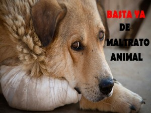 Postal: Perro maltratado