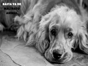 Postal: Perro triste