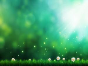 Flores y la luz del sol