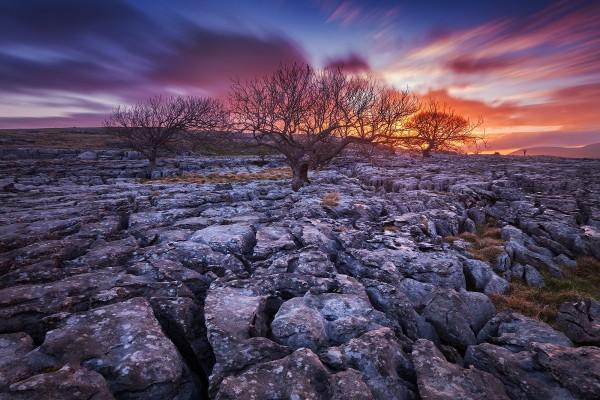 Árboles sobre piedras