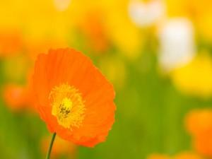 Postal: Bella flor naranja