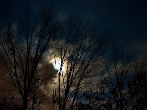 Árboles al anochecer