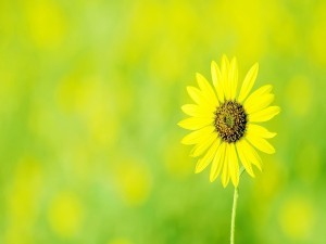 Postal: Solitaria flor amarilla