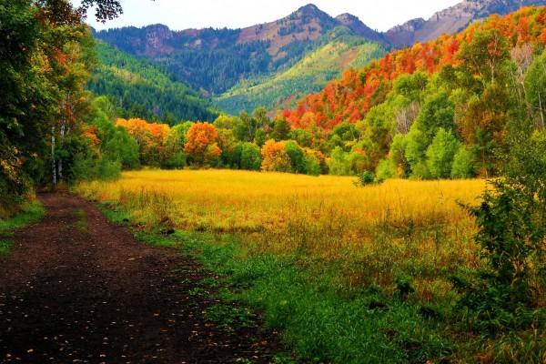 Un campo en otoño