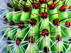 Postal: Espinas de un cactus