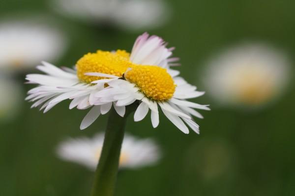 Tallo con dos flores