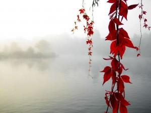 Ramas con hojas rojas en un lago