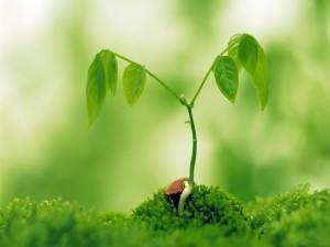 Postal: Planta que crece