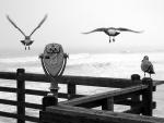 Tres gaviotas en el muelle
