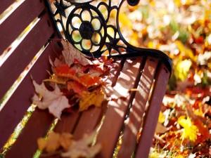 Banco con hojas secas