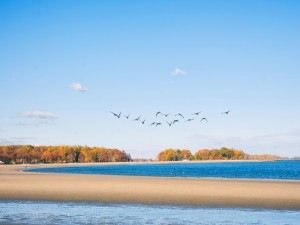 Postal: Gaviotas volando sobre el mar