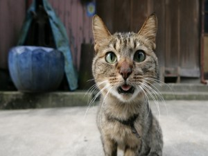Gato mirando a la cámara