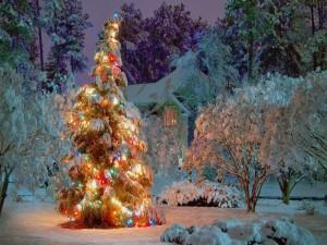 Nieve y pino iluminado