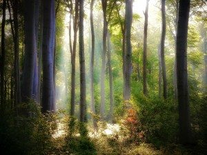 La luz del sol iluminando el bosque
