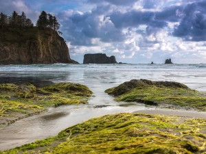 Una playa en el Parque Nacional Olympic, Washington